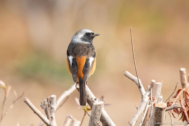 20190225-kingfisher-DSC_1862
