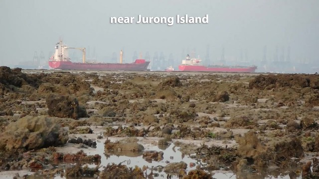Living shores of Terumbu Pempang Laut, Dec 2018