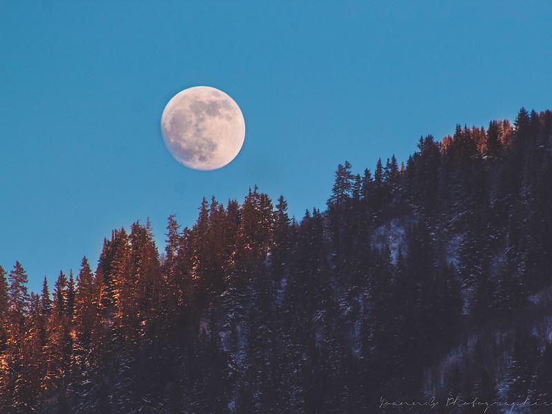 La lune sous toutes ses formes!! 32953139878_404f8419a7_c