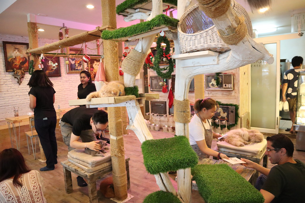 Caturday cat cafe (6)