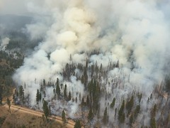 looking down from a helicopter flying above a burning wildland fire. Smoke is rising from a green conifer forest, but little flame is visible.