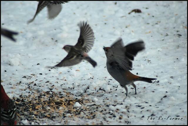 2019-02.birds.flying