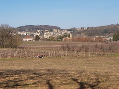 Vinyards on the banks of the Lot looking at Puy l'Eveque in February