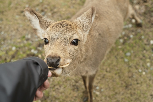 eat deer rice cracker