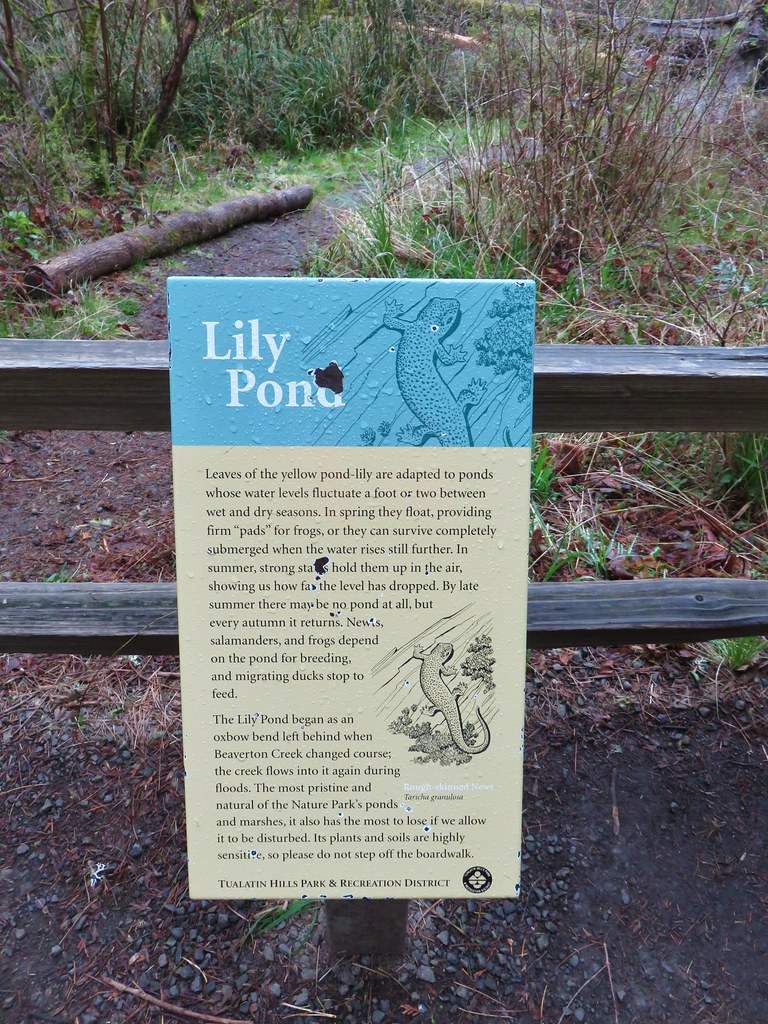 Interpretive sign at the Lily Pond