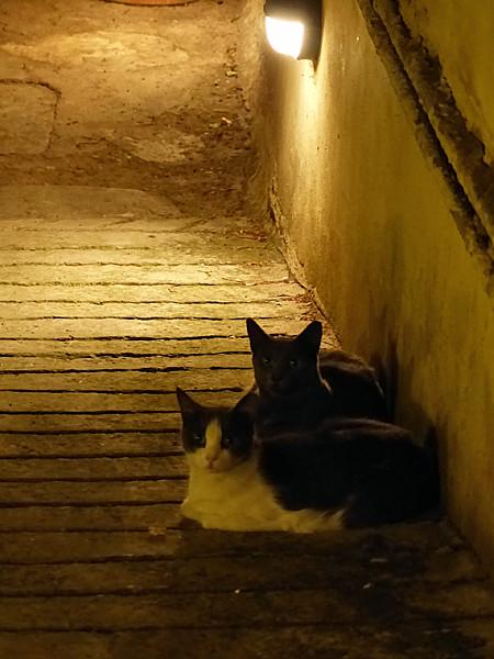 deux chats dans les escaliers