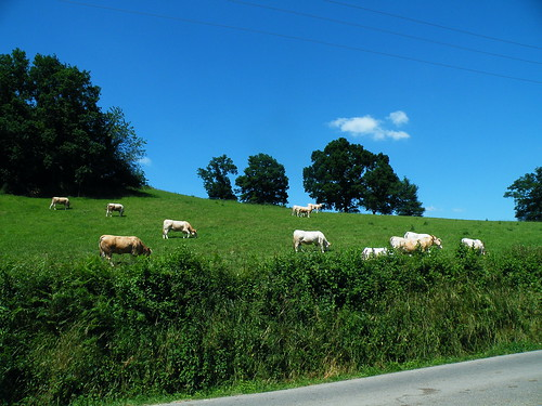 20090602 188 1112 Jakobus Kühe Bäume Wiese Straße