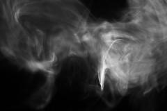 Smoke Phoenix