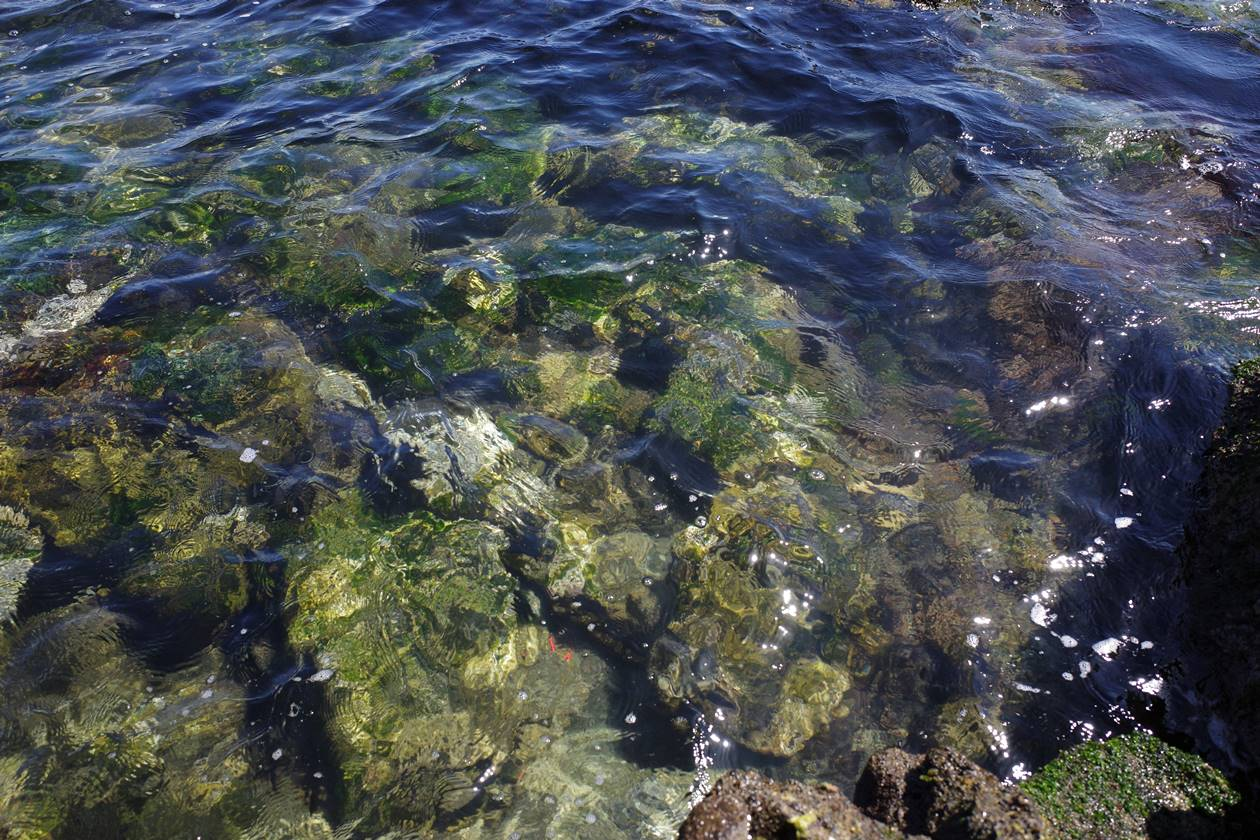 猿島・透き通った海