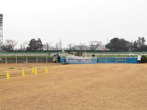 中山競馬場5号生垣障害の観戦スポット