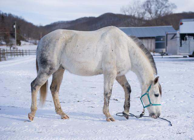 20190122 Horses_18