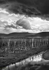 Schauerwolken in der Vorderpfalz