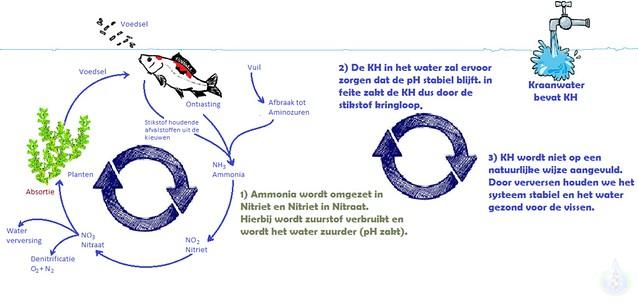 Tekening 2.3 - Adviesgroep Koi en vijver - stikstofkringloop