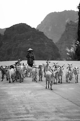 Vietnam in Black and White - 2018
