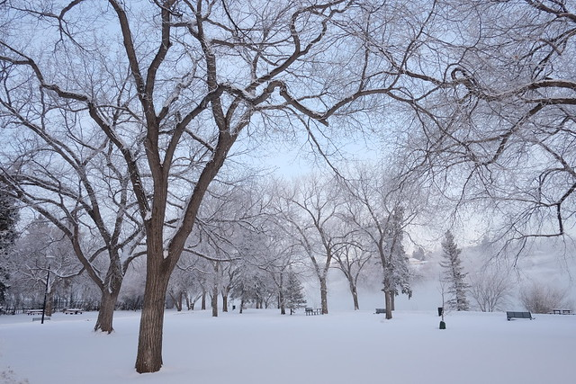 Winter in Saskatoon