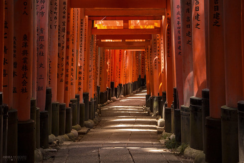 Fushimi Inari Taisha, Torii Trail - Kyoto (Japan)