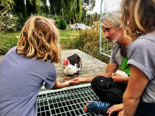 Grant, the Smalls and Grand Prince Frederich Muscovy Duck the First.