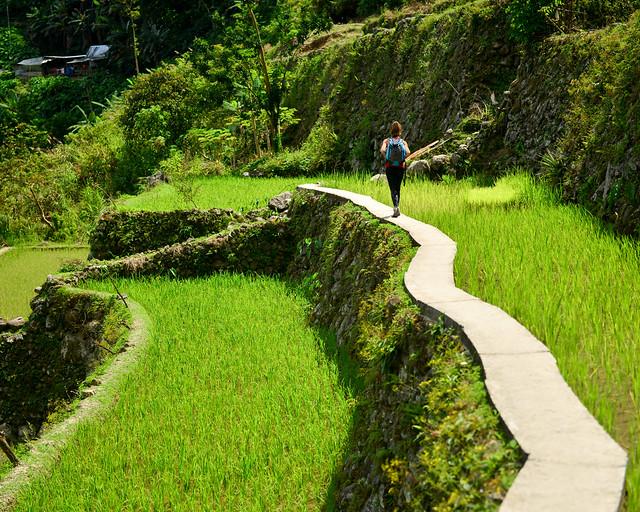 Caminos junto a los arrozales de Batad