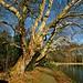 De bomen dorren in het laat seizoen