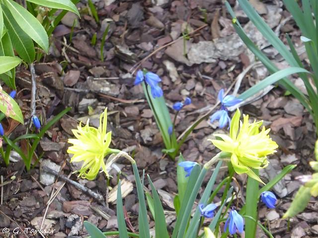 Garten im März 2019
