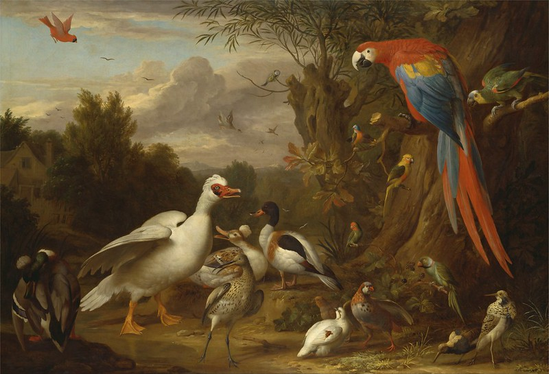 Jacob Bogdani - A Macaw, Ducks, Parrots and Other Birds in a Landscape (c.1709)