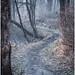 Misty Forest 2 by frosty22727@sbcglobal.net