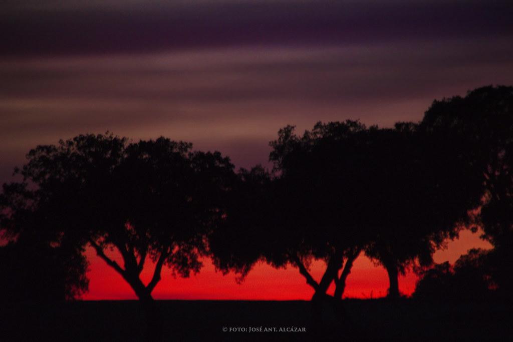 Puesta de Sol en una Dehesa con tonos malvas y rojos