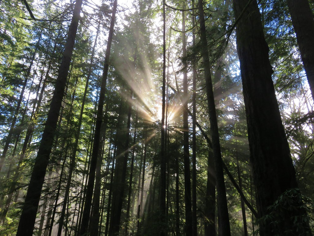 Sun behind trees in the Willamette National Forest