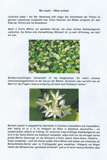Bärlauchzeit ... Waldpark Mannheim ... Fotos, Rezepte, Herbarium ... Brigitte Stolle