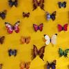 Vlinders #nasgrafischontwerp #rotterdam #dagjeuitmetkinderen #maritiemmuseum #maritiemmuseumrotterdam #expo #iphonese #iphoneonly #igrotterdam #igersrotterdam #vlinders #knappekoppen