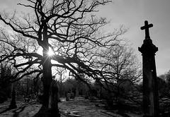 "Cincinnati - Spring Grove Cemetery & Arboretum ""Cross & Srarlight At Big Oak Tree"""