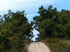 20080916 38187 1017 Jakobus Weg Wiese Bäume - Photo of Pern