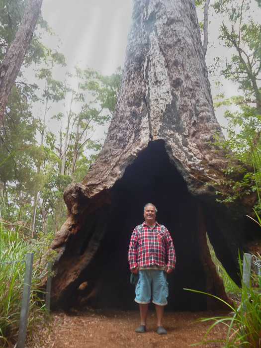 Me in hole in huge Tingle tree