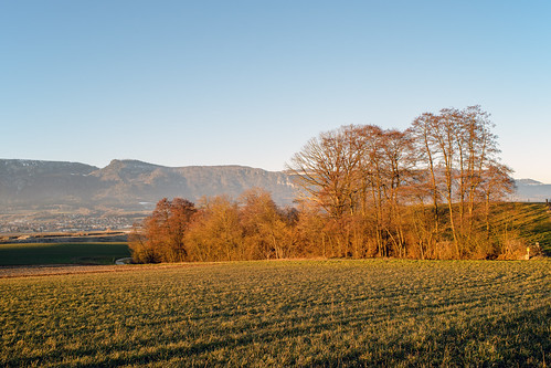 Evening View of the Jura