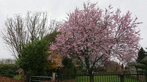 Het wordt voorjaar - Foto: Tiny Post.