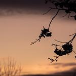 Sunset Haslam 1