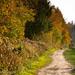 Hampshire in Autumn-15