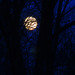 Super worm moon by cheryl.rose83