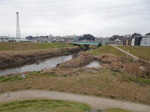 埼玉県朝霞市田島公園 野鳥撮影スポット