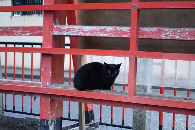 Today's Cat@2019-03-07