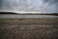 cornfield flooded