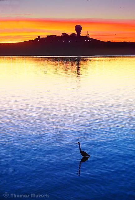 Heron, Half Moon Bay