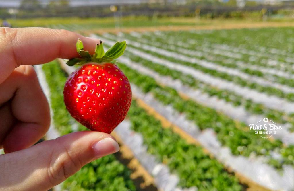 草莓世界.台中採草莓05