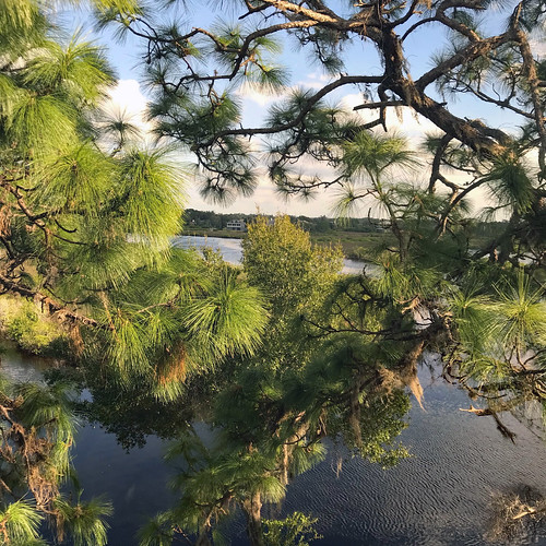view landscape lake trees pine florida gulfcoast sky clouds water tarponsprings