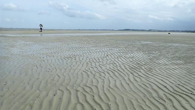 Chek Jawa northern sand bar