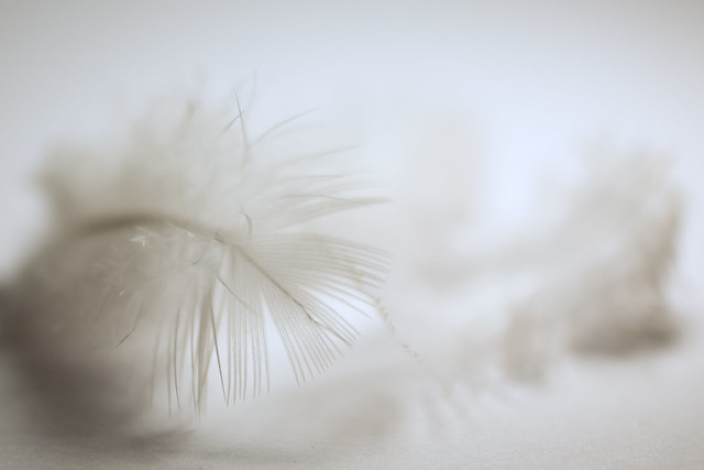 Soft feathers (explored #3), Canon EOS 70D, Canon EF 50mm f/2.5 Macro
