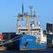 Ocean Observer - Leith - 13-01-19
