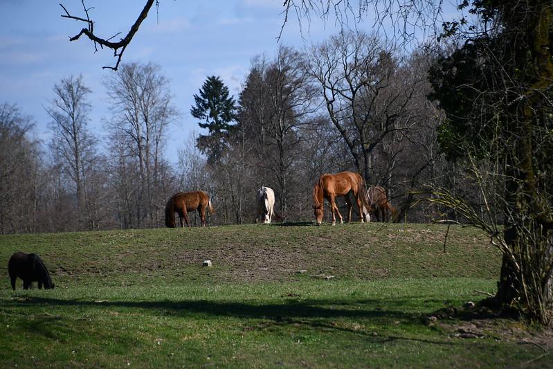Horses 28.03 (1)