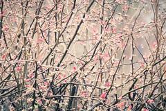 Les fleurs du jour - Photo of Voissay