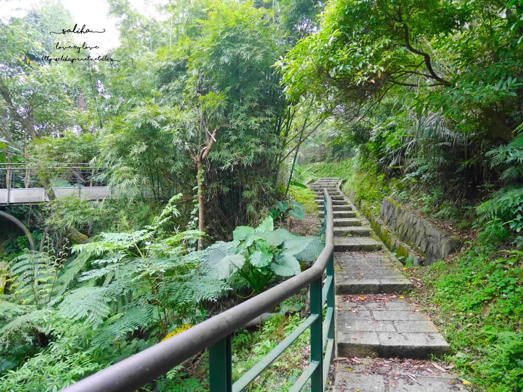 台北貓空一日遊爬山景點樟湖步道 (4)